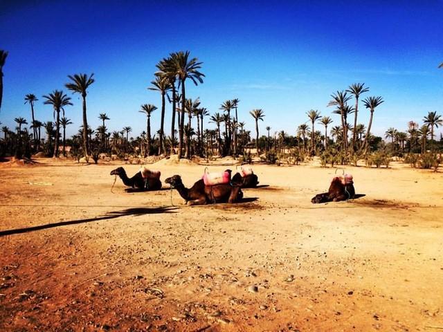 Tour 3 giorni da Marrakech al deserto