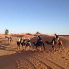 Excursion en camello por el desierto